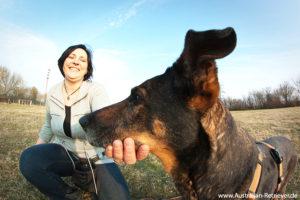 hundetraining in rostock