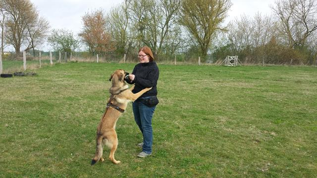 Einzeltraining und Verhaltenstherapie